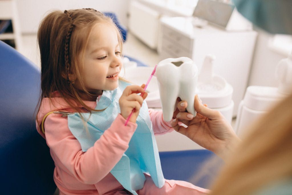 Little girl learning to brush her teeth  using a tooth model